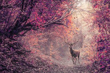 Das Rotwild im roten Wald von Elianne van Turennout