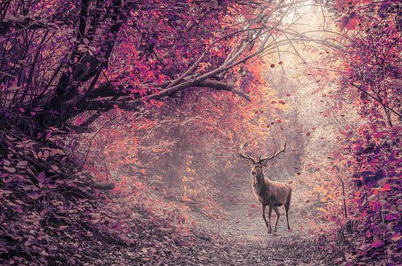 Het rode hert in het rode woud