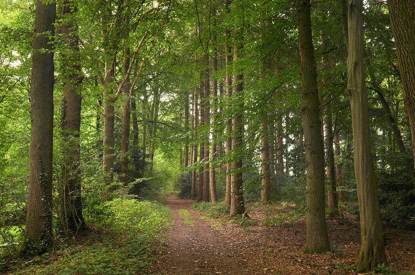 In het bos van Corinne Welp