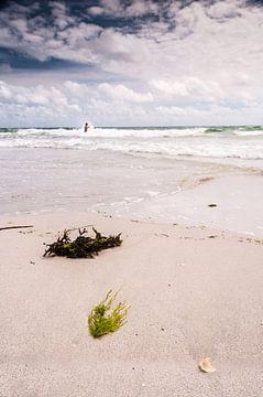 Algue sur la plage sur Richard Janssen