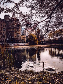 Swan Love von Iman Azizi