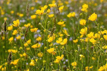 Blumenfeld von Dirk Smit