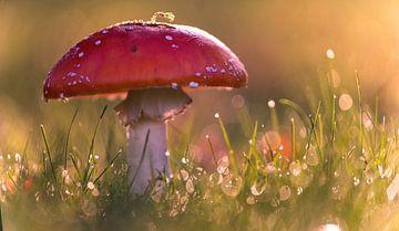 Herbstfarben von Tanja Riedel