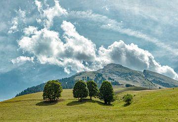 Pointe de Merdassier, alpenweide met vier bomen, La Clusaz, Haute-Savoie, Frankrijk, , van Rene van der Meer