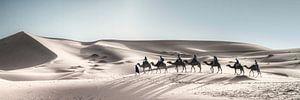 Sahara Riding