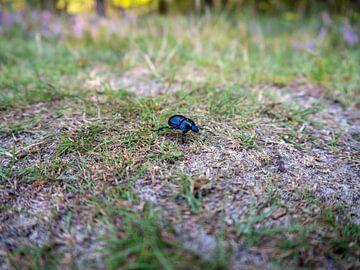 Käfer auf Lager von ronald Bergen Bravenboer
