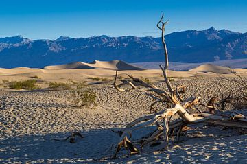 Death Valley, einer der heißesten Orte der Welt. von Peter Leenen