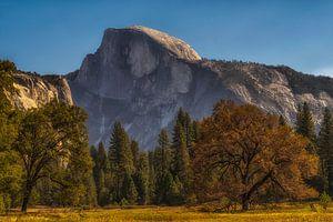 Yosemite park van