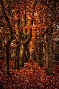 Herfst in het bos van Marjolijn van den Berg