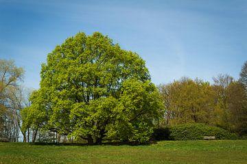 Boom in park von Michel Vedder Photography