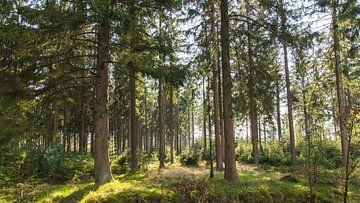 In het bos van Neil Kampherbeek