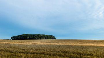 Bauminsel im Getreidemeer von Timo Bergenhenegouwen