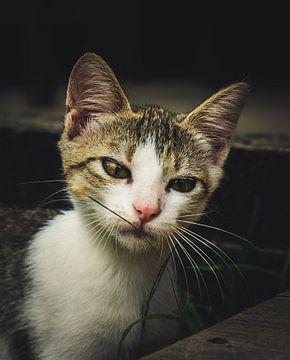 Portret van een kat von Bert Broer