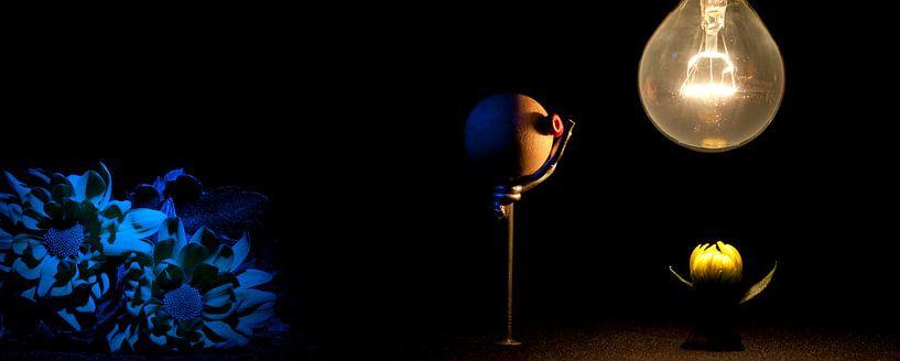Donker en licht van Jeroen Middelbeek