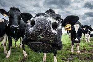 De koe van Boer Janmaat, Barwoutswaarder van