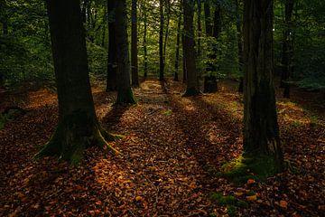 Prachtige ochtend in het Oisterwijkse bos. van justus oostrum