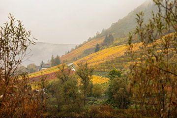 wijngaard aan de oever van de moezel in Cochem van gea strucks