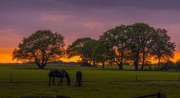 Paarden op de Kuiperberg