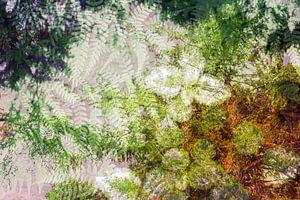 Forest van Paula van den Akker
