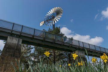 Landbouw windmolen en narcissen in de lente van Patrick Verhoef