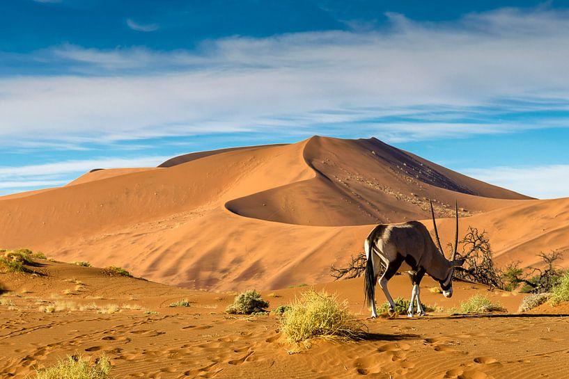 Oryx in de Namibische woestijn van Theo Molenaar