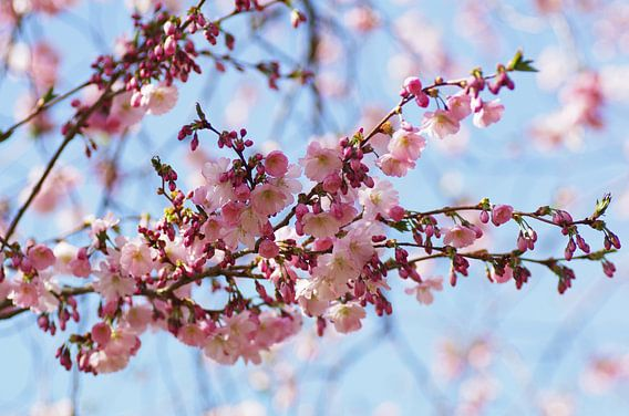 Voorjaar Dream in roze pastelkleuren