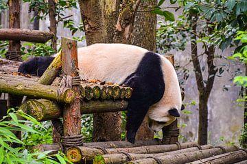 Schlafender Panda von Kenji Elzerman