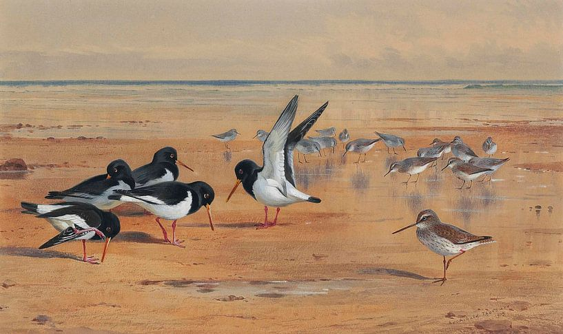 Birds on a Beach van Antonije Lazovic