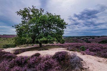Schöner Baum in der Heidelandschaft von Dennis Bresser