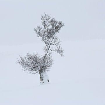 Schneebaum auf dem Schauinsland von Patrick Lohmüller