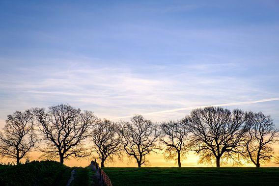 Silhouette der Bäume