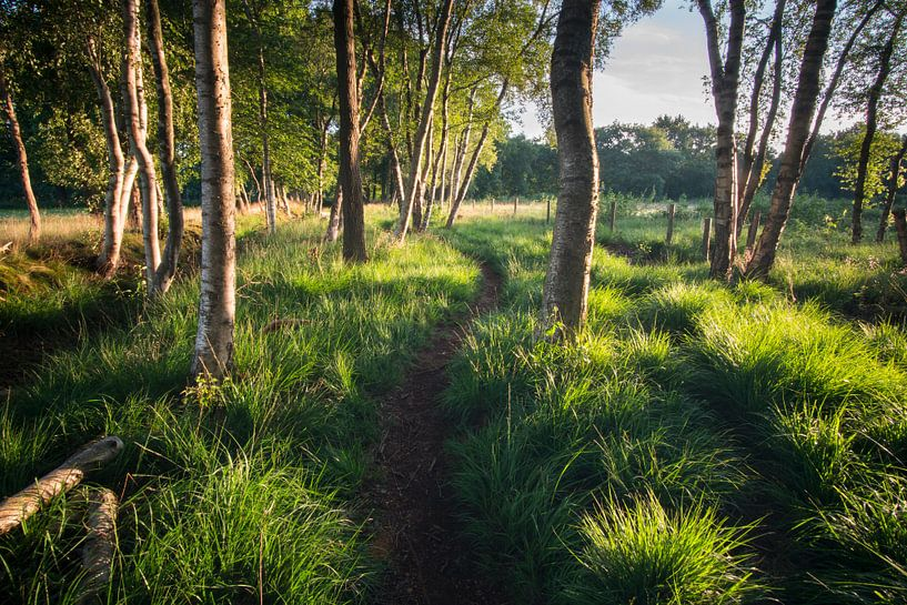 Waldweg in der Morgensonne von Hessel de Jong