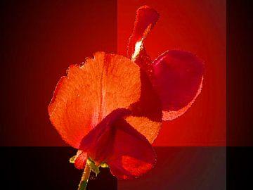Wickenblüte – Vetch Art von Dirk H. Wendt