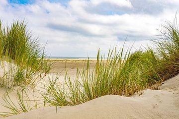 Dünengras in den Sanddünen am Strand der Insel Terschelling von Sjoerd van der Wal
