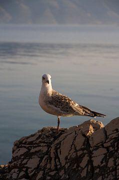 Meeuw op een rots aan zee van Maike Meuter