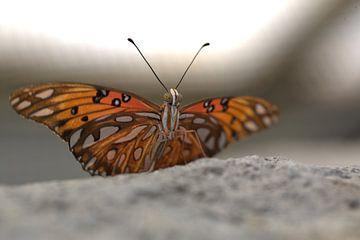 Vlinder van Eric Verhoeven
