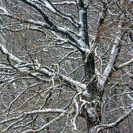 Les premières chutes de neige sur jowan iven