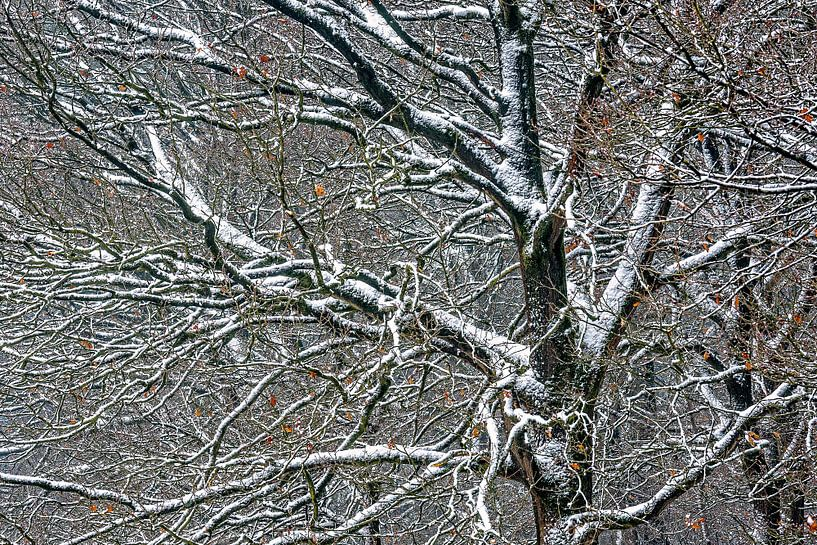 a taste of winter van jowan iven