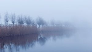 Misty van