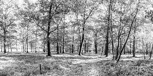 Bos, zwart/wit van