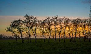 Zonsondergang en een rijtje bomen