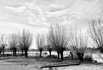 Reihe von Bäumen in Holland schwarz und weiß von Consala van  der Griend