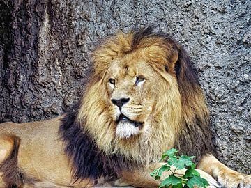 Löwe, König der Tiere von Eduard Lamping