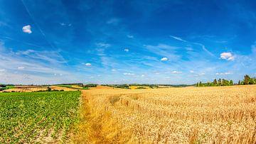 Graanvelden in de zomer van Günter Albers