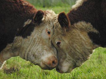 Kühe emotional ~ in Farbe von Robin van der Land