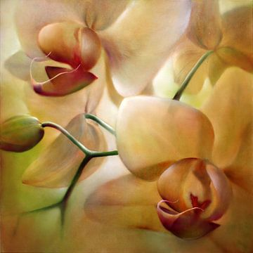 Orchideeën van Annette Schmucker