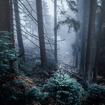 Nebelwald 008 von Oliver Henze