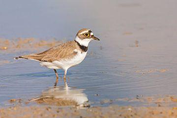 Strandvogel von Kris Hermans
