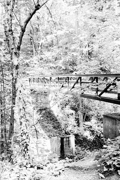 Holzbrücke im Wald, Limburg (die Niederlande) von