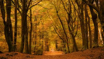 Het bos met de dansende bomen  van Bram van Broekhoven